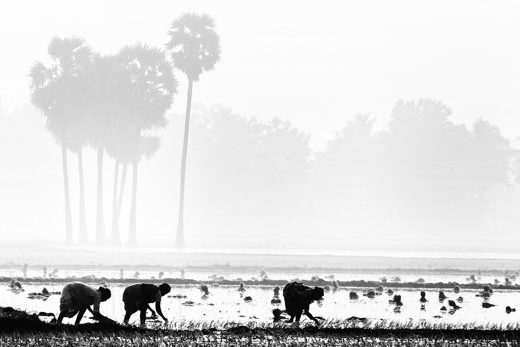 People farming field in India (b&w)