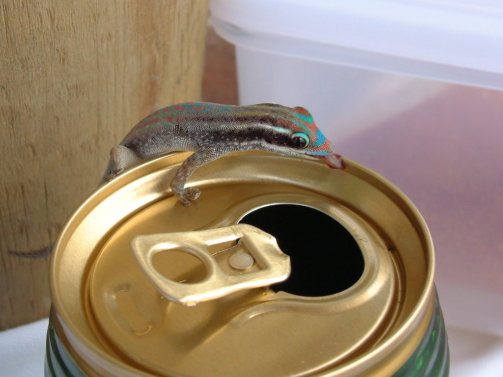 One Boozy Gecko, Mauritius