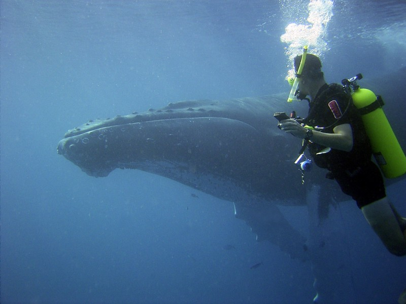 Diving with Humpback Whale in Dominican Republic