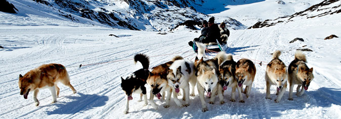 Dog sledder in the snow in Sisimiut, Greenland