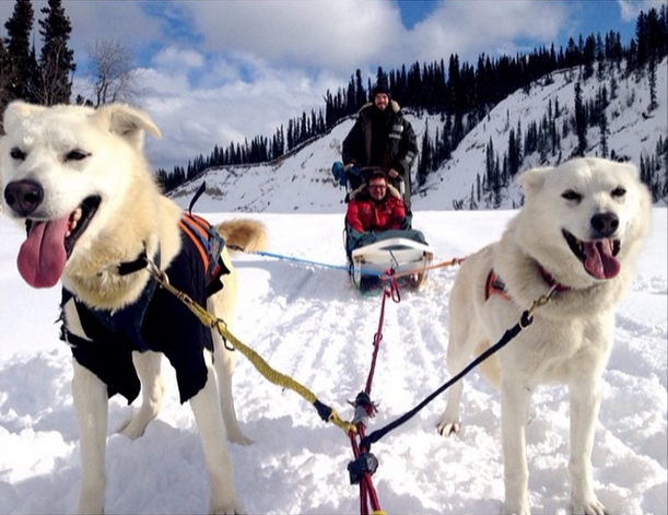 Dogsledding Near Whitehorse (in Canada's Yukon Territory)