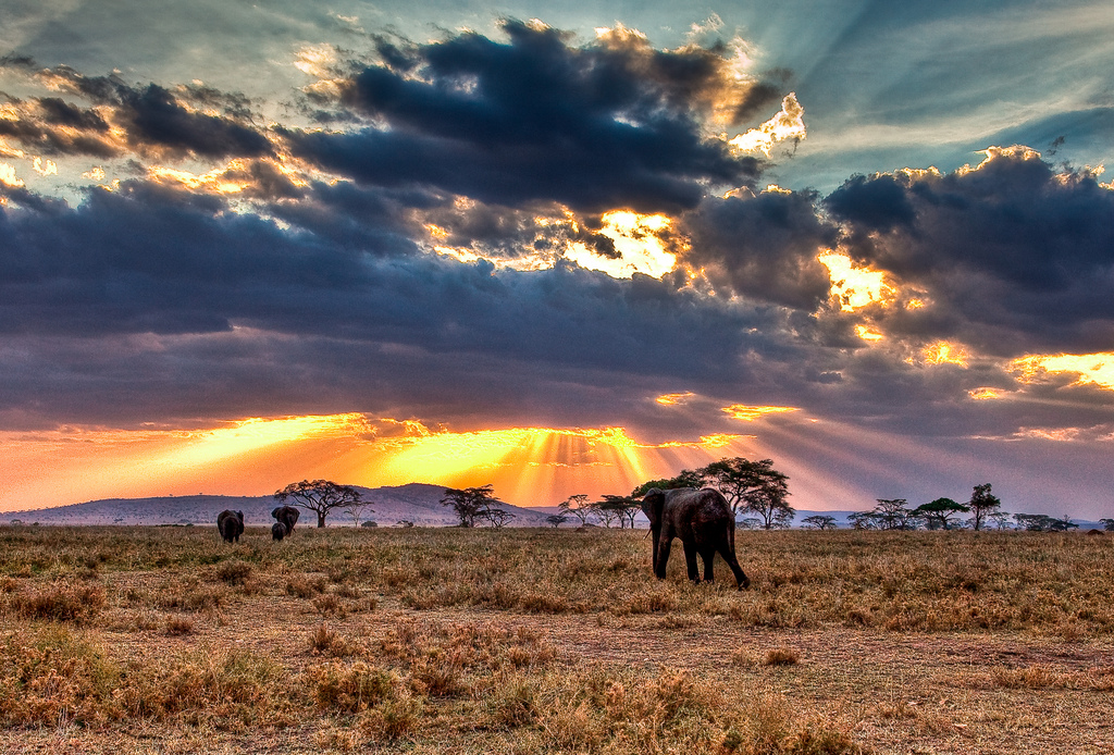 Elephants in Serengeti National Park (Tanzania)