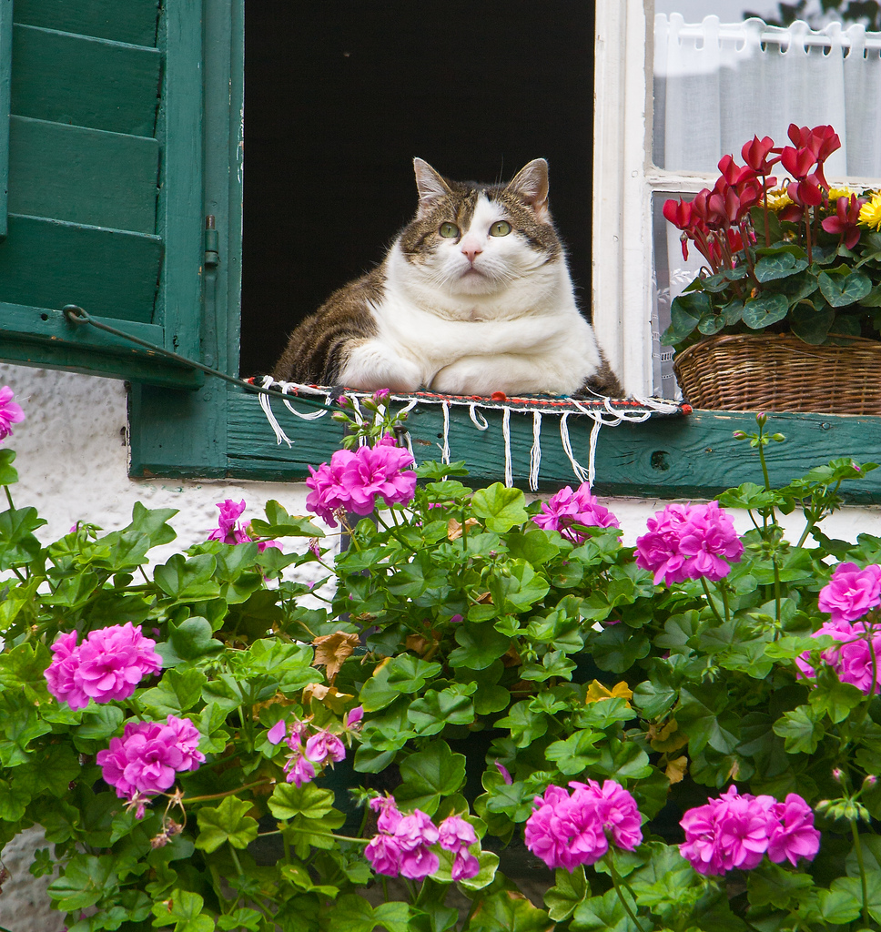 The Fat Cat of Salzburg, Austria