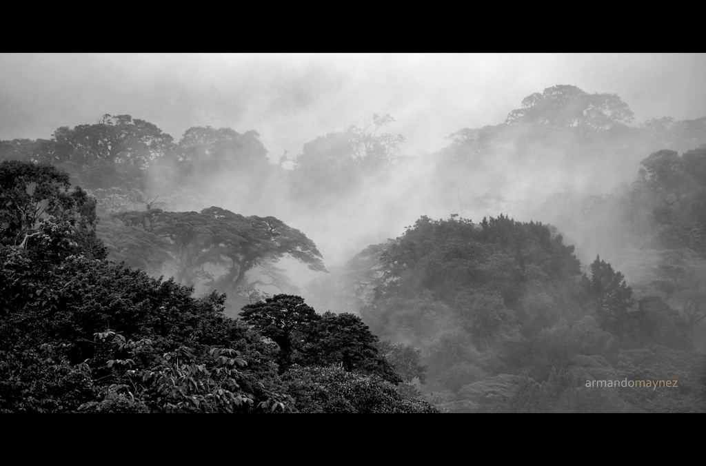Fog over the rainforest in Costa Rica