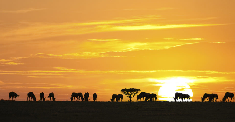 Sunset in Tanzania During Great Migration