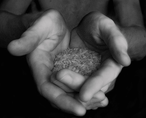Hand holding rice (closeup black and white)