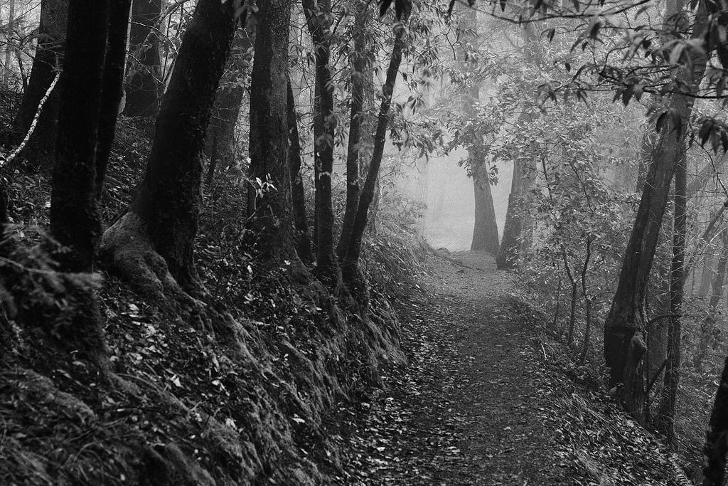 Wooded path in Rio Nido, California