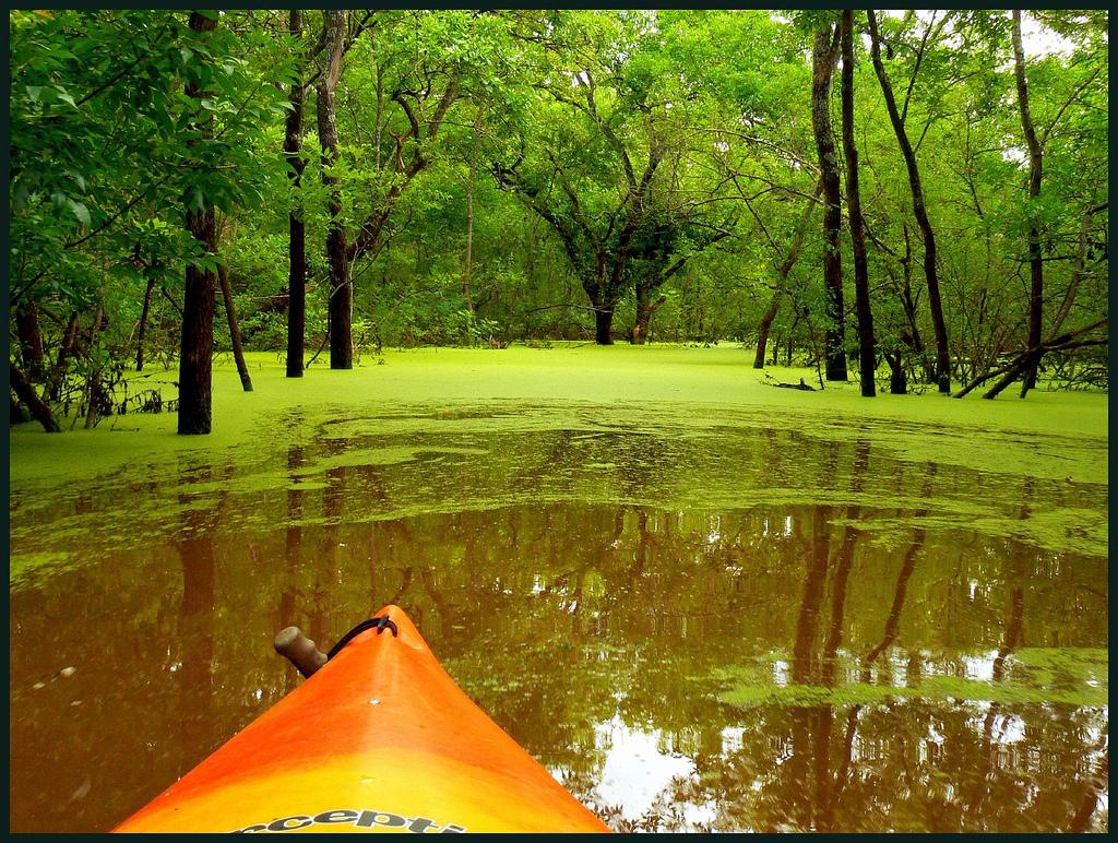 Kayaking green swamp in Oklahoma