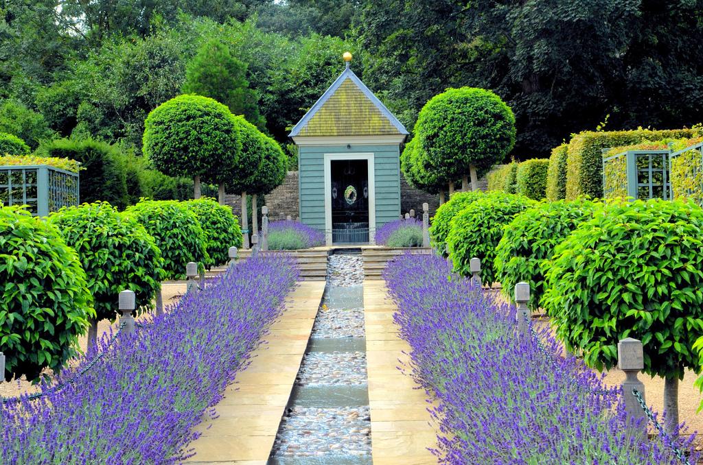 Lavender in Bloom, Lincolnshire, United Kingdom