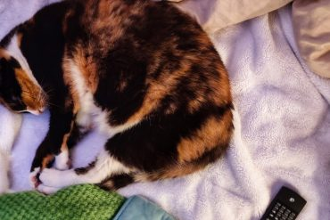 Lizzi the calico cat asleep on the bed in our travel trailer