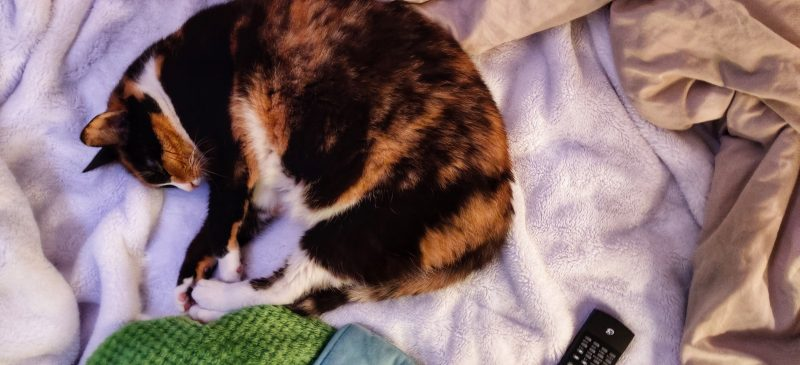 Tips for Traveling with Cats in a Travel Trailer or RV — Vagabondish