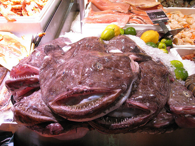 Monkfish on Ice at Fish Market