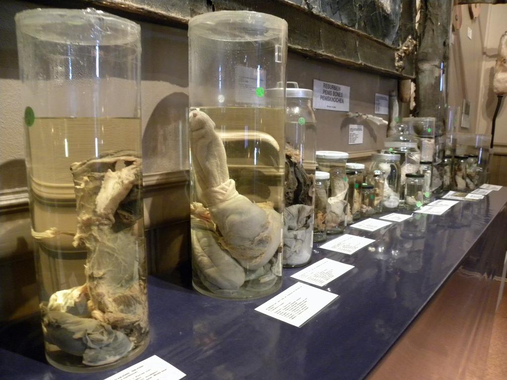 Phallological Museum, Iceland
