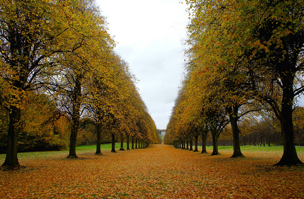 Along the Tree Line, Belfast, Northern Ireland