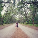 The Avenue at Wormsloe Plantation in Savannah, GA